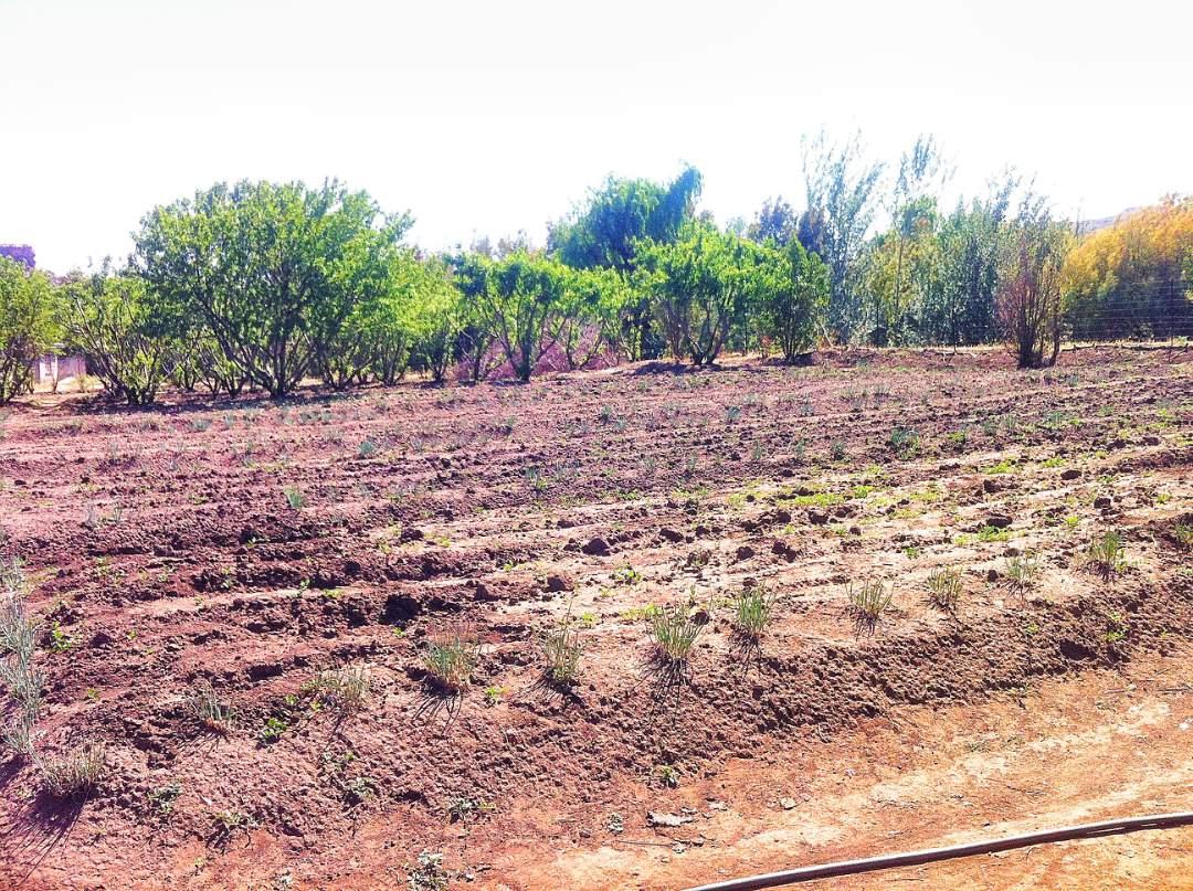 fields before