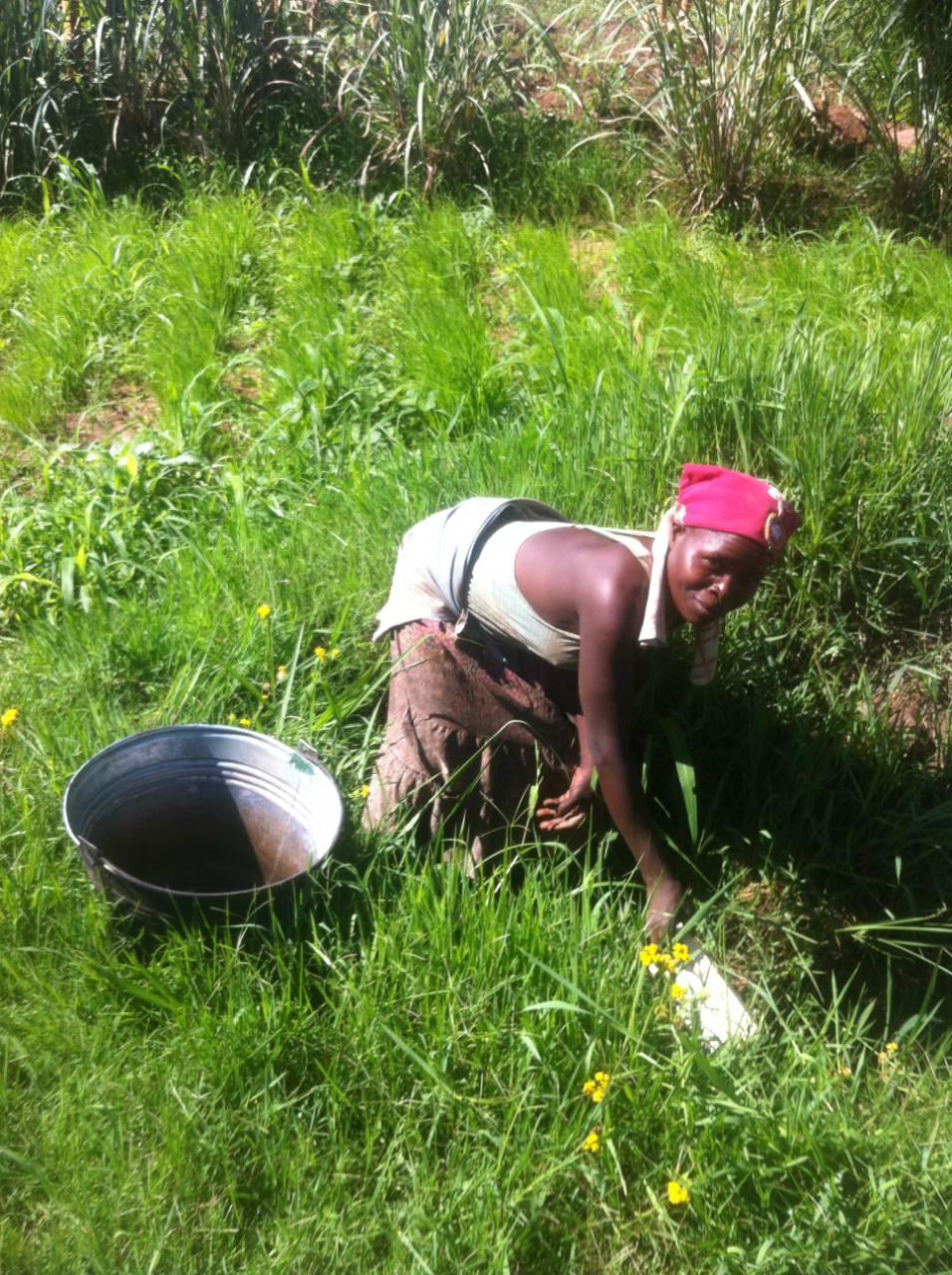 Saiti Village Borehole Project - Malawi
