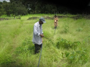Conclusion of 52 Pumps in 52 Weeks – Senegal – Project 10 - Saare Gouna, Community Garden