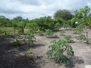52 Pumps in 52 Weeks – Senegal – Project 13 - Dassilame Serere Eco Campament Pump Expansion Project