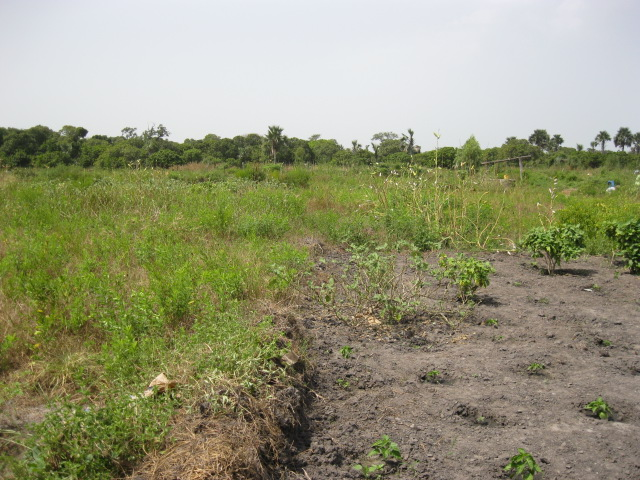 52 Pumps in 52 Weeks – Senegal – Project 16 - Daro Keur Ibrahima Signane, Community Garden