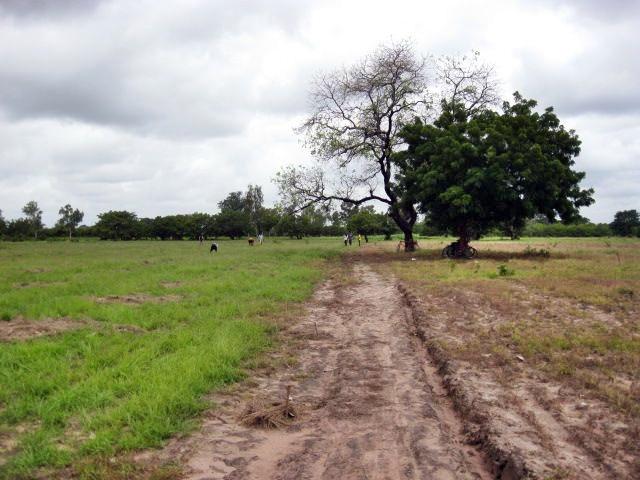 Conclusion of 52 Pumps in 52 Weeks – Senegal – Project 18 - Faraba, Moringa Garden (Part 2)