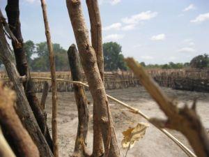 52 Pumps in 52 Weeks – Senegal – Project 2 - Saare Yero Diao