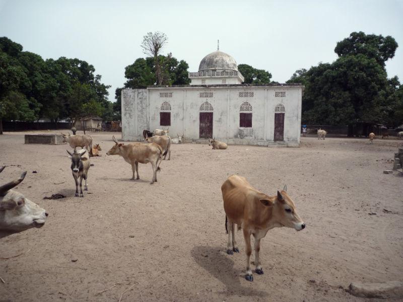 52 Pumps in 52 Weeks – Senegal – Project 3 - Massarinko