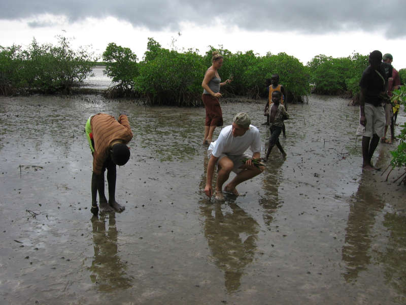 Sipo Mangrove Reforestation Project – Senegal