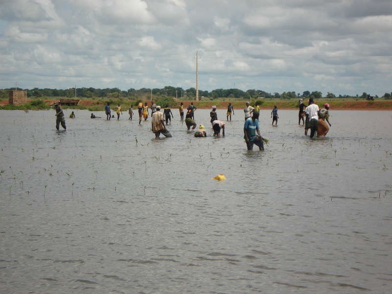 Conclusion of Sipo Mangrove Reforestation Project – Senegal