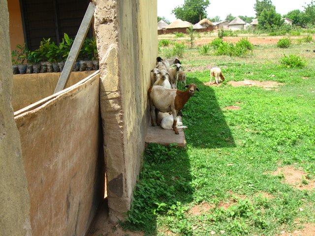 House - Ghana