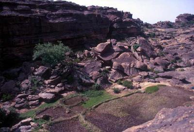 Farming in Mali