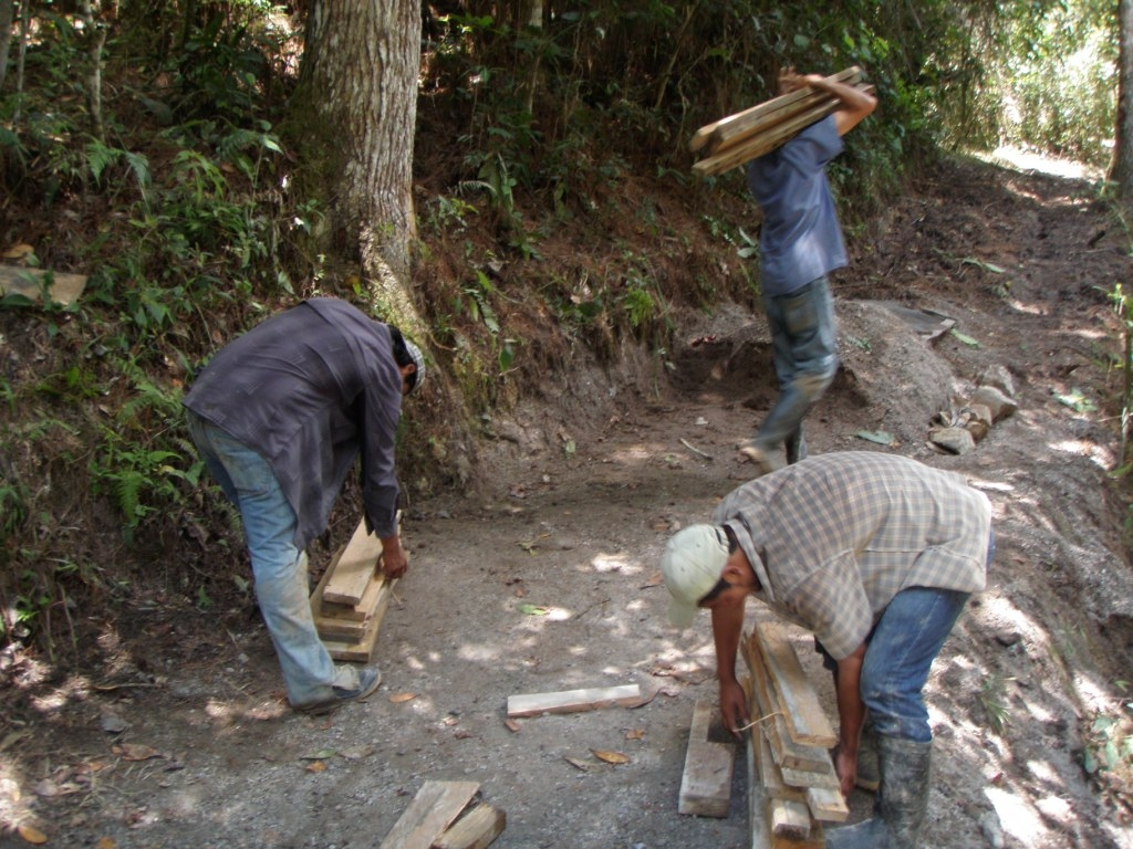 Wood for Forms - Honduras