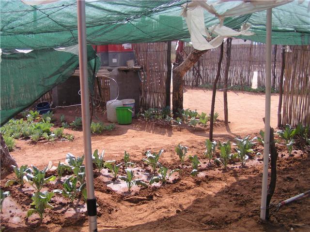 Namibia Garden Tires