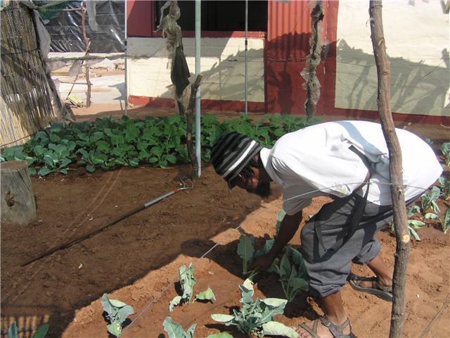 Namibia Garden Tending