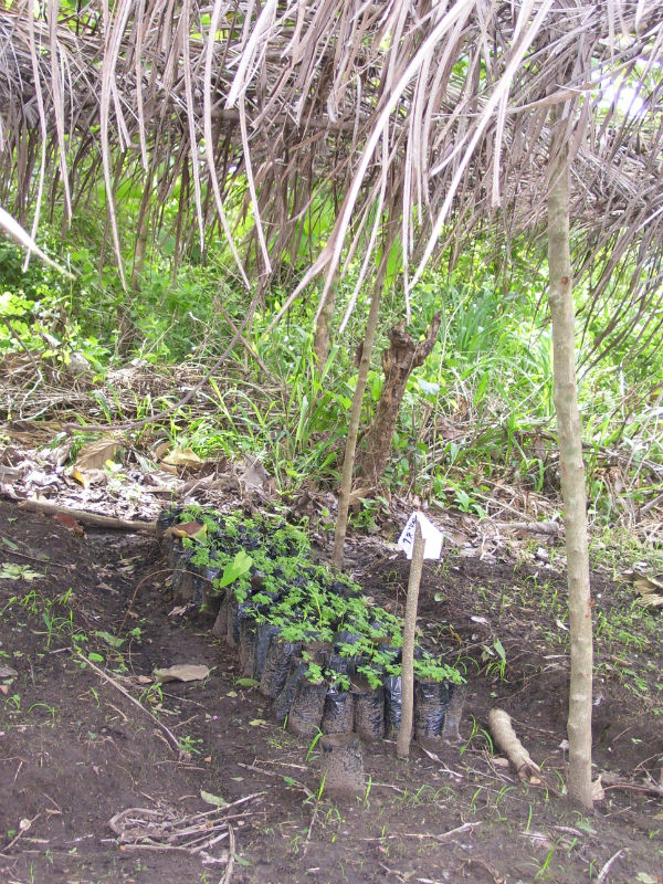Conclusion of Kologan Agroforestry Project – Togo