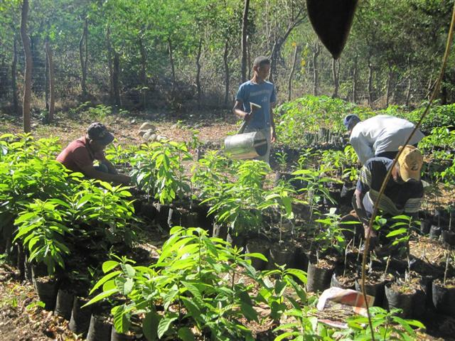 Conclusion of Fruit Tree Reforestation – Dominican Republic