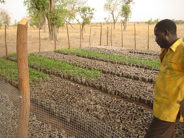 Conclusion of Moringa Tree Plantation Project – Togo