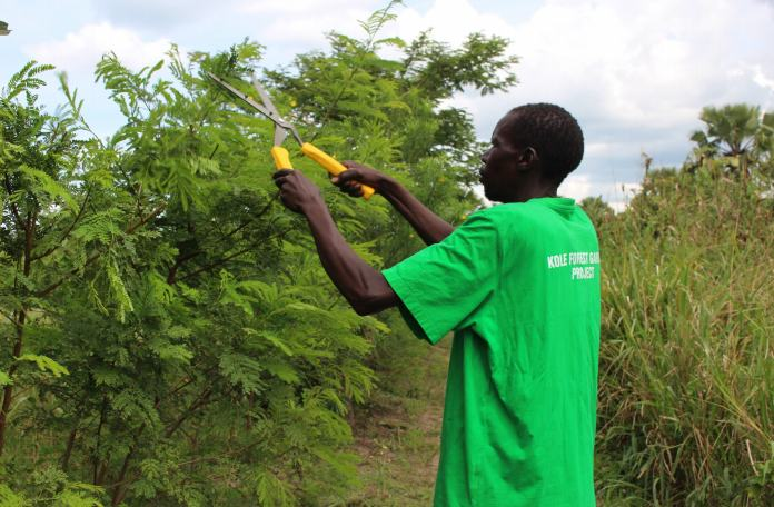 Conclusion of Kole Forest Garden Project - Uganda
