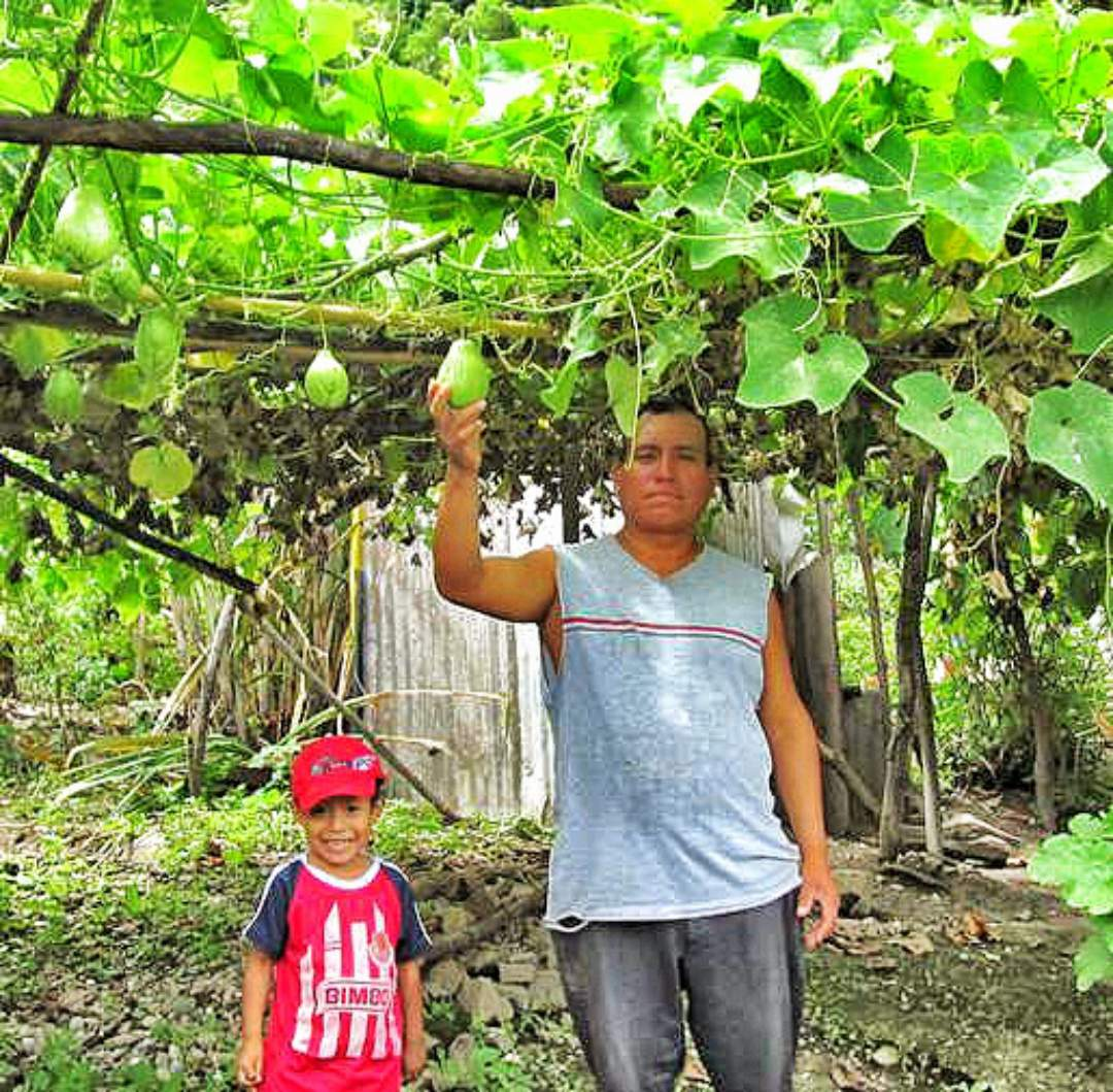Father and son picking fruit